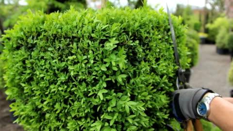 gardening/trimming - pruning stock videos & royalty-free footage