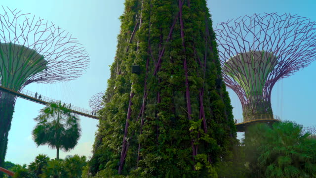 gardens by the bay supertree grove dolly move - singapore stock videos & royalty-free footage