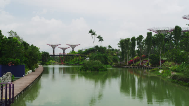 gardens by the bay - dragon tree stock videos & royalty-free footage