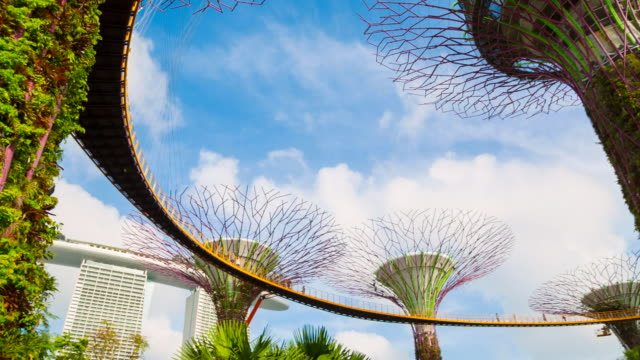 gardens by the bay with supertree grove and skywalk - grove stock videos and b-roll footage