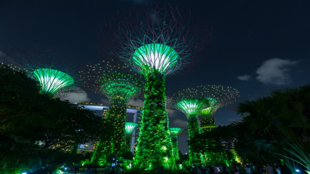 TL MS Gardens by the Bay with Supertree Grove at night