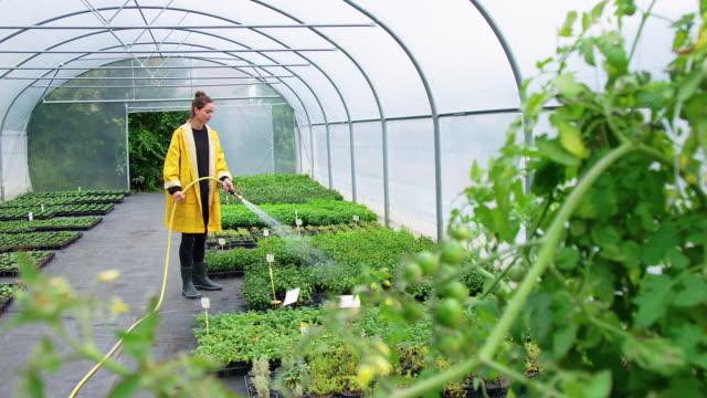 gardner watering plants in greenhouse - organic farm stock videos & royalty-free footage