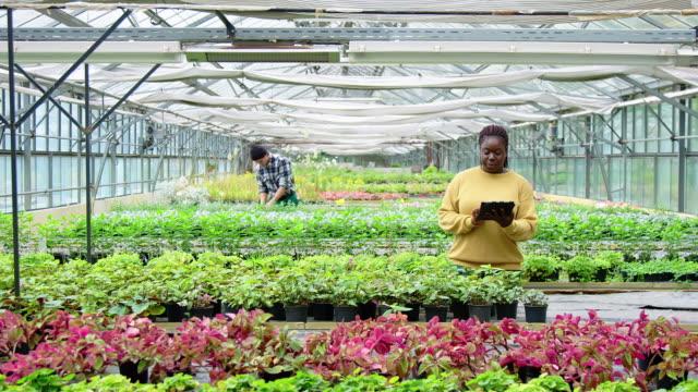 植物の保育園で働くガードナー - グリーンハウス点の映像素材/bロール