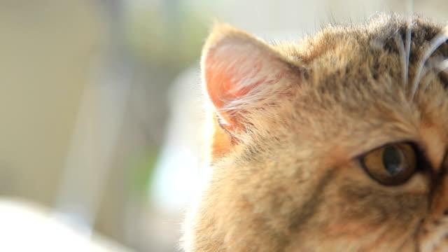 Garfield,close-up