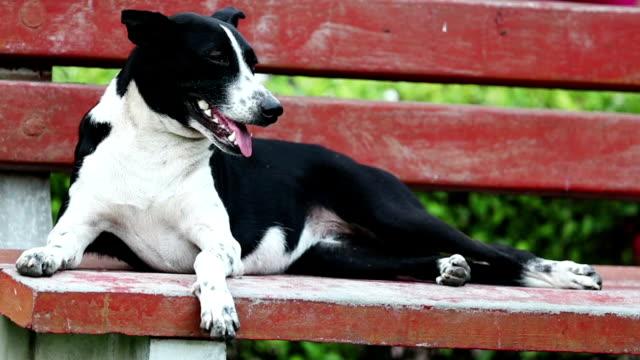 vídeos de stock e filmes b-roll de gasping dog & sitting on park bench - banco assento