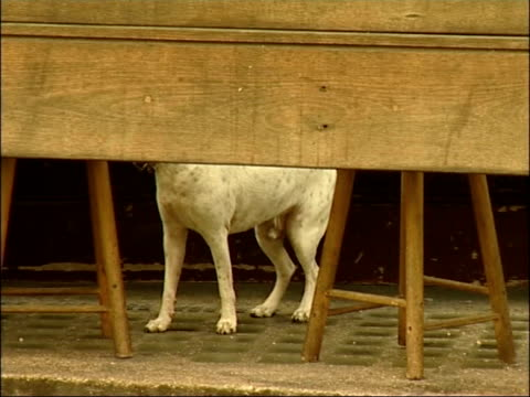 Al Murray's view CUTAWAY EXT Dog along outside pub as sniffs ground Bell rung at bar for last orders