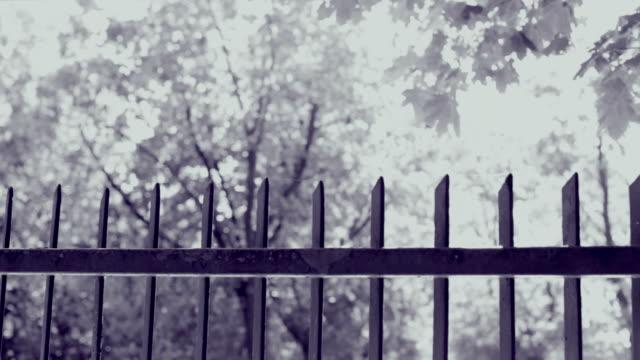 vídeos de stock e filmes b-roll de gate, fence, plants - cerca