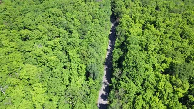 gatineau park,quebec - gatineau stock videos & royalty-free footage