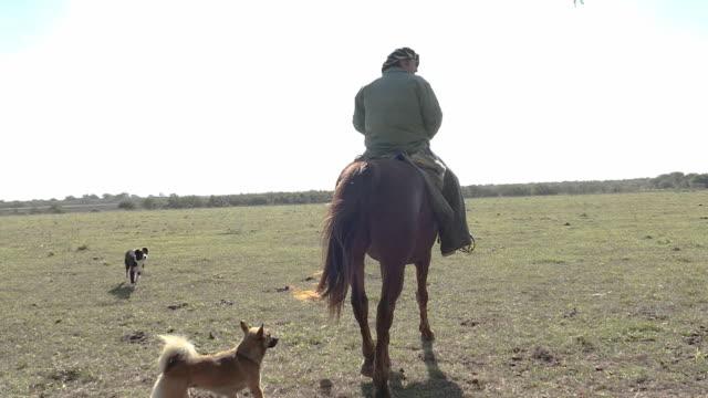 vídeos de stock e filmes b-roll de gaucho argebino is leaving in their horse and his dogs in slowmotion - gaúcho