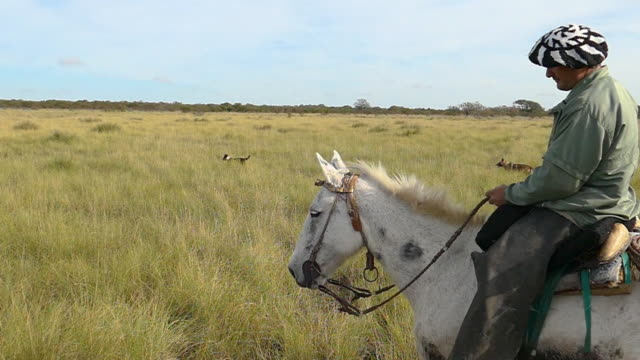 gaucho argentino riding a horse in the field slowmotion - argentina stock videos & royalty-free footage