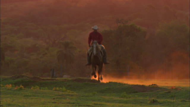 a gaucho's horse kicks up dust as it moves across a range. - cowboy ranch stock videos & royalty-free footage