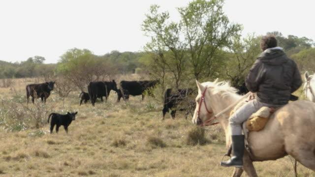vídeos de stock e filmes b-roll de 2 gauchos in santa fe argentina watching the cows - gaúcho