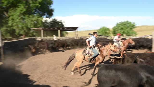 vídeos de stock e filmes b-roll de gauchos on horseback working with cattle - gaúcho