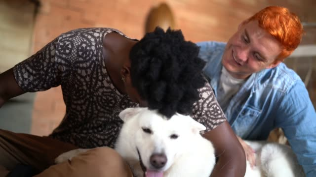 gay couple with berger blanc suisse dog at home - fond blanc stock videos & royalty-free footage