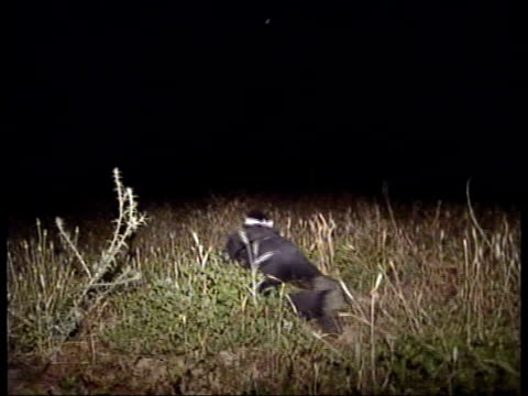 vidéos et rushes de gaza: night seq palestinian militants of the al aqsa martyrs brigade patrolling field near border i/c seq palestinian militants patrolling perimiter... - étroit