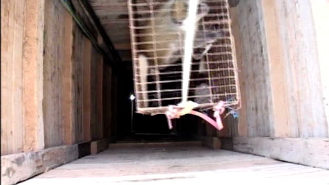 gaza zoo paints zebra stripes on donkeys; *uk rights only, no international use* recent gaza/egypt border: int tunnel animal smugglers carrying... - tunnel stock videos & royalty-free footage