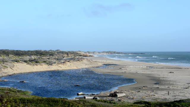 gazos リーク州立ビーチ沿いにカリフォルニア hw 1 - 動物の色点の映像素材/bロール