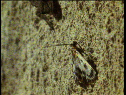stockvideo's en b-roll-footage met gecko on wall moves to attack and eat moth - ongewerveld dier