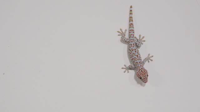 vídeos y material grabado en eventos de stock de gecko's - pared de contorno