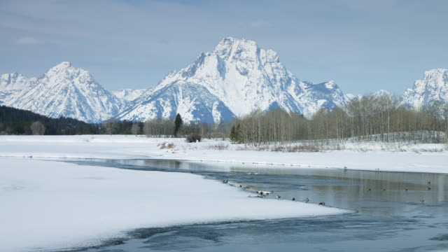 geese and ducks by snake river in grand teton national park - grand teton stock videos & royalty-free footage