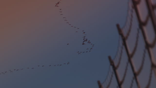 vidéos et rushes de geese flying over the military demarcation line / dmz (demilitarized zone between south and north korea), goseong-gun - frontière