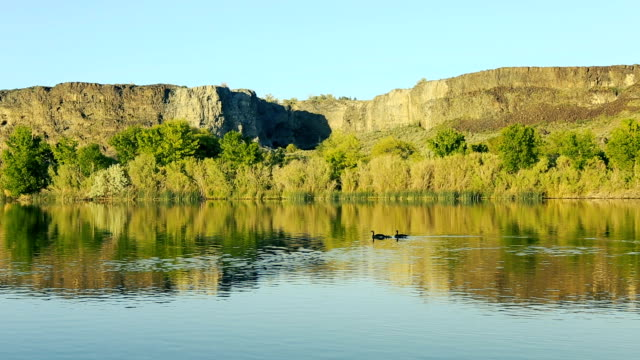 geese on the snake river - snake river stock videos and b-roll footage