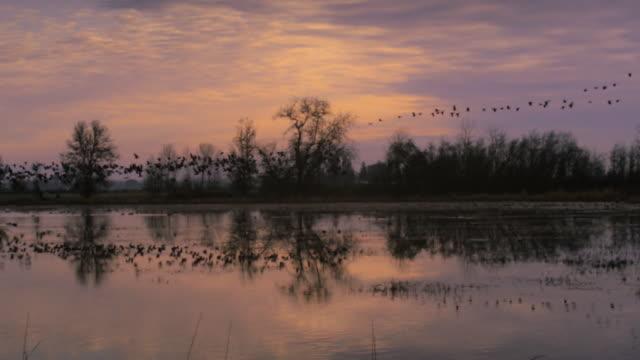 vídeos y material grabado en eventos de stock de ws pan slo mo  geese taking off from wetlands / finley national wildlife refuge, oregon, usa - barnacla del canadá