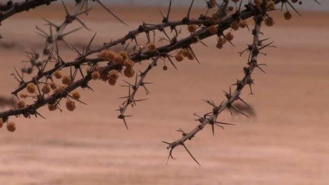 Gemsbok in the Namibian Desert