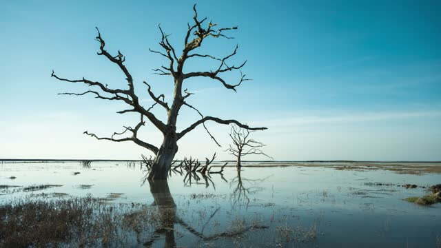 genera view of the tide rising around a dead tree at porlock salt marsh on may 25, 2021 in exmoor national park, england. - branch stock videos & royalty-free footage
