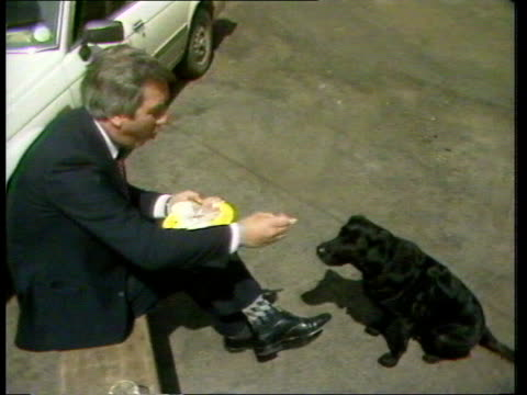 general election 1983: election animals; england: london: int cms dizzie, lab ldr, michael foot's tibetan terrier asleep in back of car zoom liberal... - offbeat stock videos & royalty-free footage