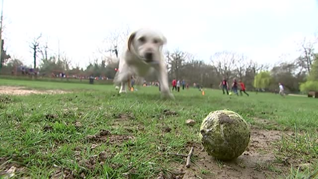 '10 to watch' enfield southgate ext stephen twigg chatting to reporter as along sot dog running along and picking up tennis ball david burrowes in... - whistling stock videos & royalty-free footage
