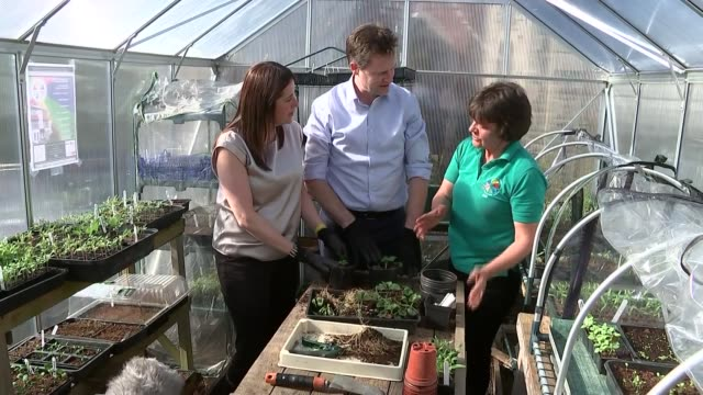 liberal democrats nick clegg at mental heath charity in powys int clegg and dodds potting plants in greenhouse / potting tomato plants clegg chatting... - powys stock videos & royalty-free footage