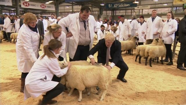 general election 2019: boris johnson visits wales; wales: llanelwedd: int various shots of boris johnson sheering sheep with shears at royal welsh... - sheep stock videos & royalty-free footage