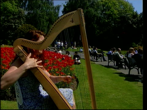 northern ireland woman playing harp in park sot nat - plucking an instrument stock videos & royalty-free footage