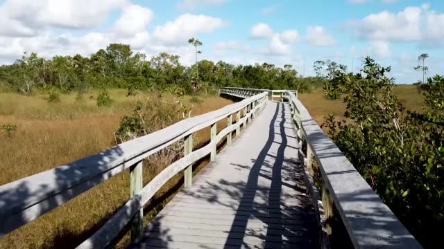 general footage of the everglades national park during the 12th day of a partial government shutdown on january 02 2019 in everglades national park... - everglades nationalpark stock-videos und b-roll-filmmaterial