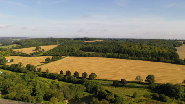 general view of ancient woodland along the proposed hs2 route on august 22, 2019 in great missenden, england. the government is to review the project... - high speed train stock videos & royalty-free footage