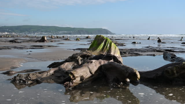 a general view of petrified ancient trees on may 24 2019 in borth wales a prehistoric forest which was buried under water and sand more than 4500... - forest stock videos & royalty-free footage