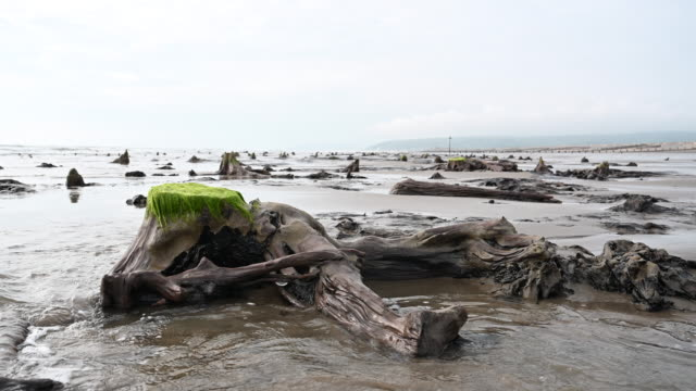 a general view of petrified ancient trees on may 24 2019 in borth wales a prehistoric forest which was buried under water and sand more than 4500... - underwater stock videos & royalty-free footage