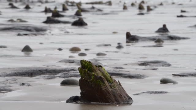 a general view of petrified ancient trees on may 24 2019 in borth wales a prehistoric forest which was buried under water and sand more than 4500... - seascape stock videos & royalty-free footage