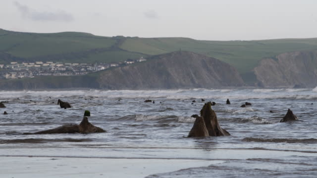 a general view of petrified ancient trees on may 24 2019 in borth wales a prehistoric forest which was buried under water and sand more than 4500... - soil stock videos & royalty-free footage