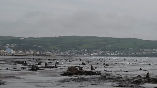 general view of petrified ancient trees on may 24, 2019 in borth, wales. a prehistoric forest which was buried under water and sand more than 4,500... - mid wales stock videos & royalty-free footage