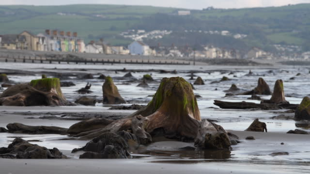 a general view of petrified ancient trees on may 24 2019 in borth wales a prehistoric forest which was buried under water and sand more than 4500... - beauty in nature stock videos & royalty-free footage