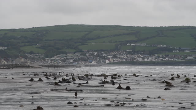 a general view of petrified ancient trees on may 24 2019 in borth wales a prehistoric forest which was buried under water and sand more than 4500... - undersea stock videos & royalty-free footage