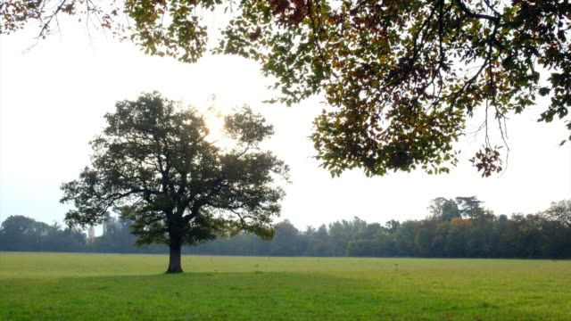 general view of the essex countryside on october 19, 2020 in essex, england. - rural scene stock videos & royalty-free footage