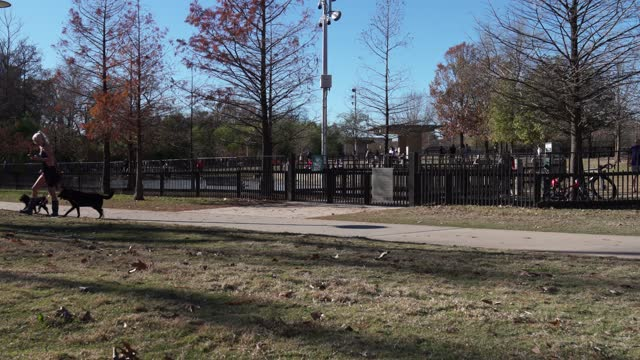 general view of the two-acre johnny steele dog park on june 30, 2019 in houston, texas. opened in buffalo bayou park in january 2015, it offers... - nicolas lisperguier stock videos & royalty-free footage