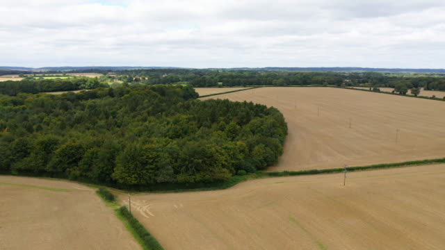general view of woodland along the proposed hs2 route on august 22, 2019 in great missenden, england. the government is to review the project to... - high speed train stock videos & royalty-free footage