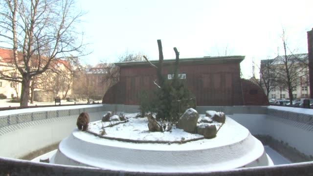 vídeos de stock, filmes e b-roll de general views 62nd berlinale international film festival on february 8 2012 in berlin germany - festival de cinema