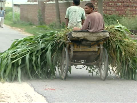 general views man riding tricycle cart along road with green leaved crops on cart as well as other man sitting at back / women using sticks to direct... - tricycle stock videos & royalty-free footage