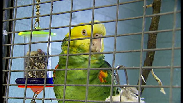 General views of animals at Heathrow Animal Reception Centre Various of yellow and green parrot looking through bars of cage and climbing around /...