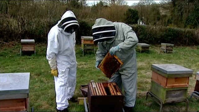 general views of beekeeper and beehives beekeeper opening hive and looking at frame / beekeeper pointing to queen bee / beekeper marking queen bee... - beruflicher umgang mit tieren stock-videos und b-roll-filmmaterial